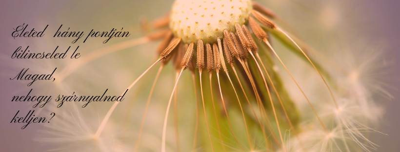 Pollen társkereső